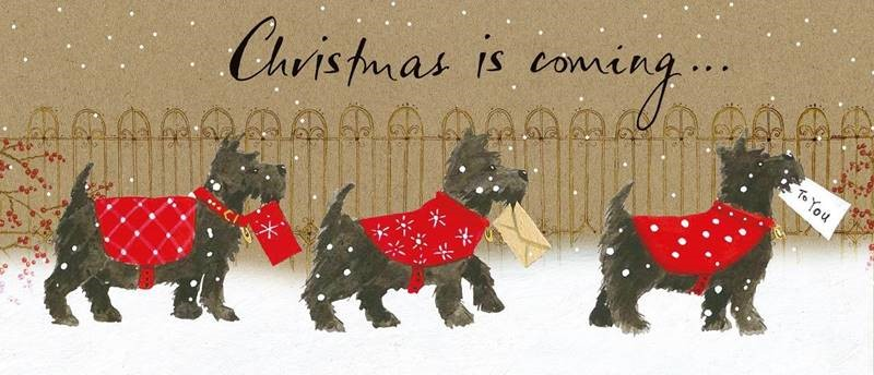 A Christmas card with Scottie dogs in red jumpers