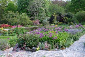 A mature garden with purple flowering shrubs