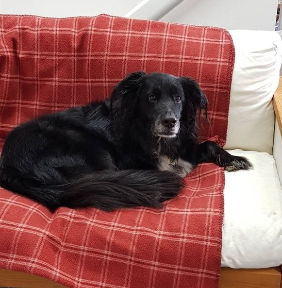 A black dog curled up on a chair