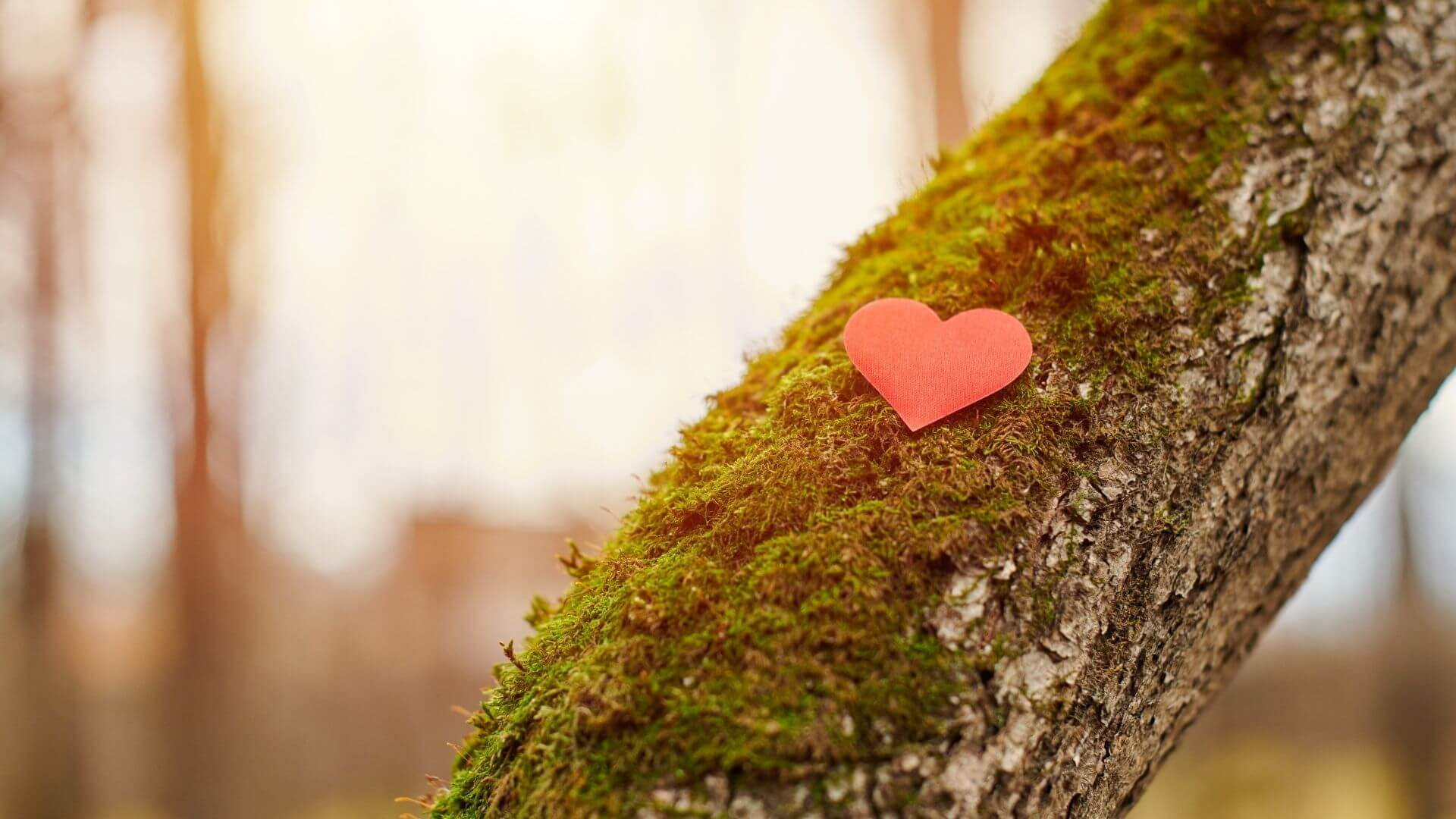 10 earth-conscious Valentine's gifts you can buy on a budget
