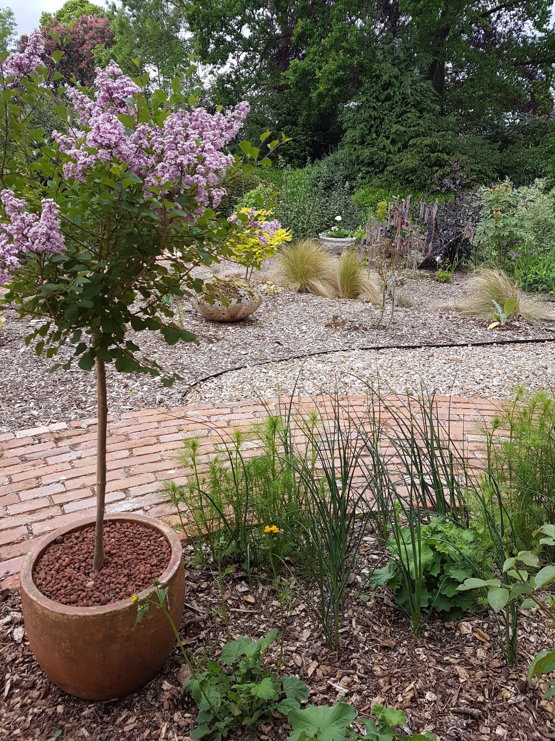 The Old Rectory – Open Garden