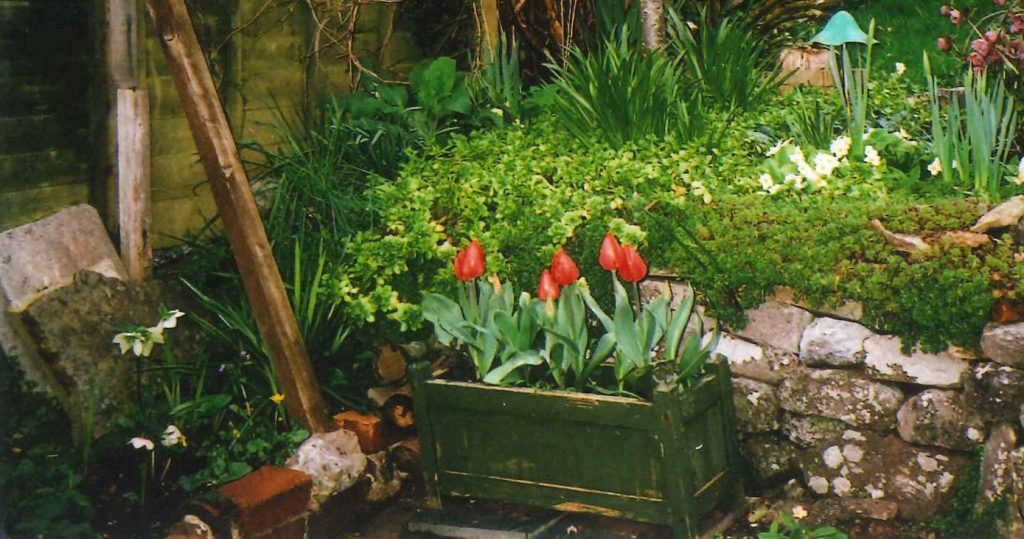 A garden with a planter of red tulips