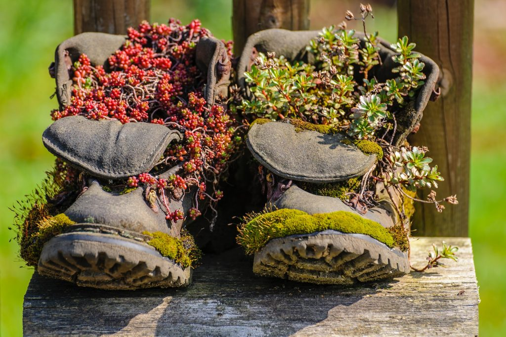 An old pair of boots with plants growing out of them