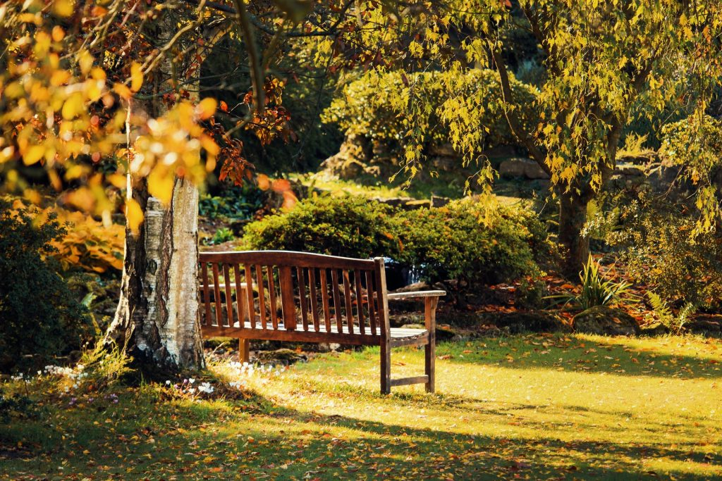 A bench under a tree full of autumnal colour